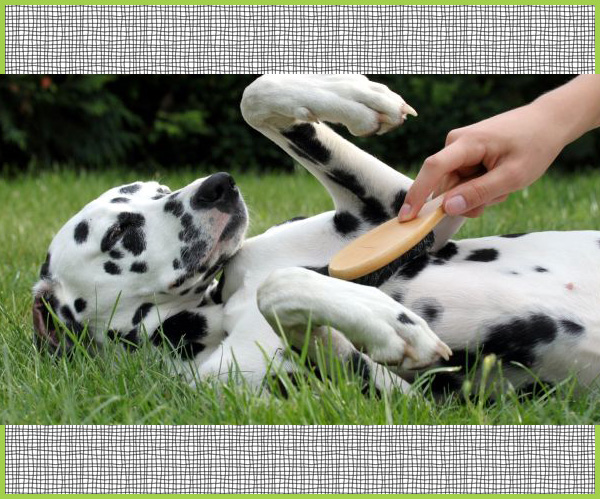 pettinare cane