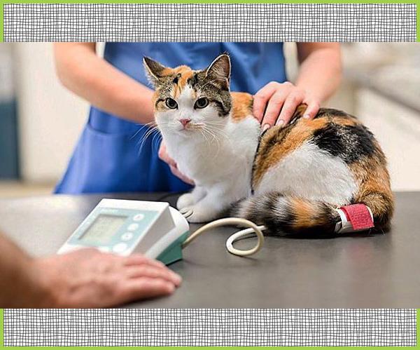 pressione del gatto